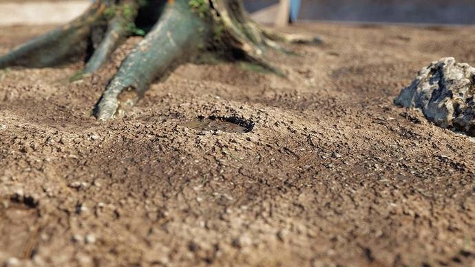 footprinted_soil-01