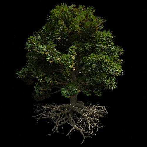 M_Tree_A_010001