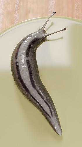 Slug_04