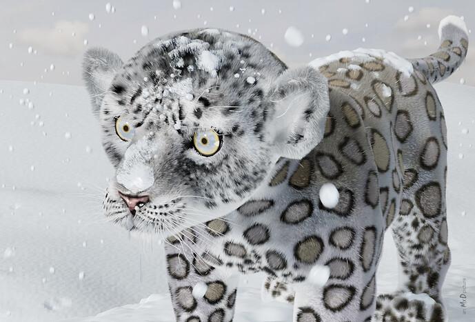 MxD-SnowLeopardCub-cam2_2