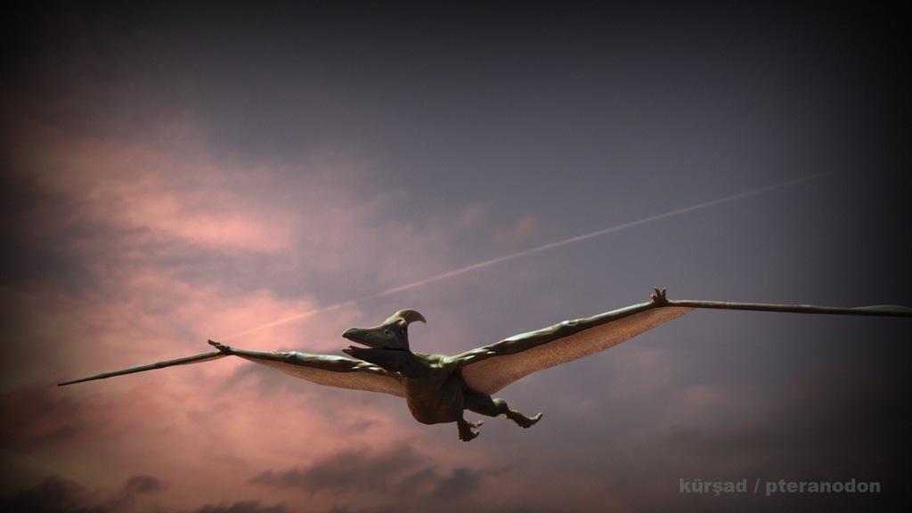 Pteranodon_RenderTest_BLNDR_KK_V05_00059