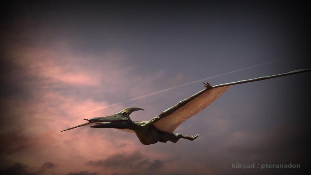 Pteranodon_RenderTest_BLNDR_KK_V05_00002