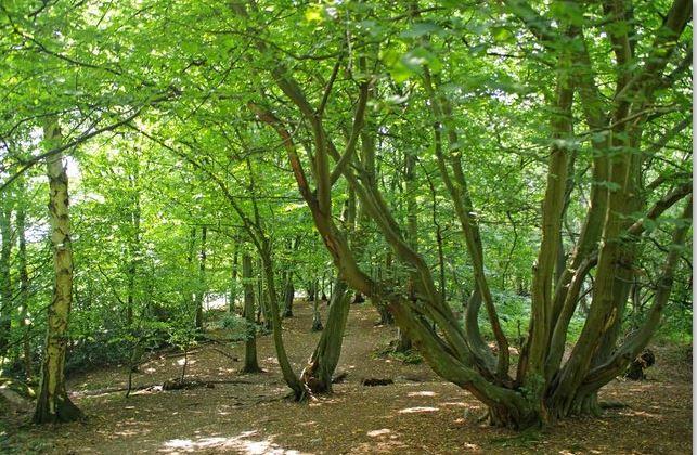 translucency_Trees