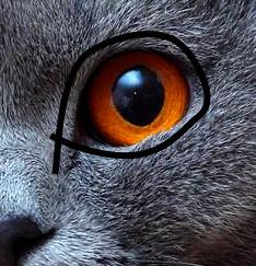 Cat head topology - Modeling - Blender Artists Community