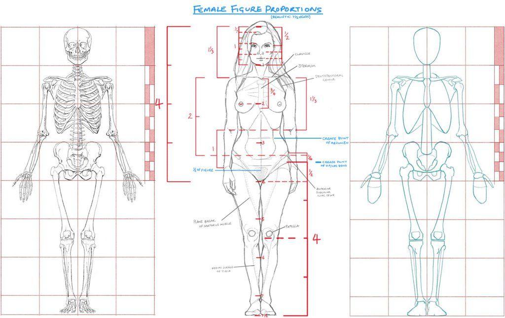 drawn-anatomy-paul-rich