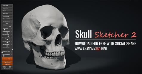 Sculpting human skull - Focused Critiques - Blender Artists Community