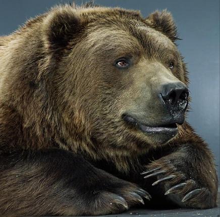 bear2_copy1