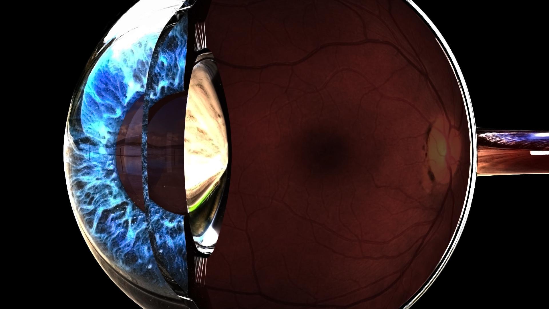Eye Anatomy - Works in Progress - Blender Artists Community