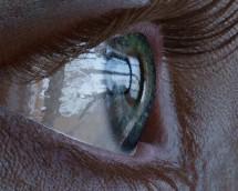 G3F_shape_02_import29_microbump_render1_cornea